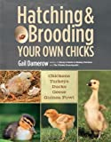 Hatching & Brooding Your Own Chicks by Gail;Damerow(2013-02-15)